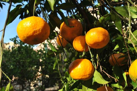 il giardino di Tatiana - La Maddalena - Bed & Breakfast