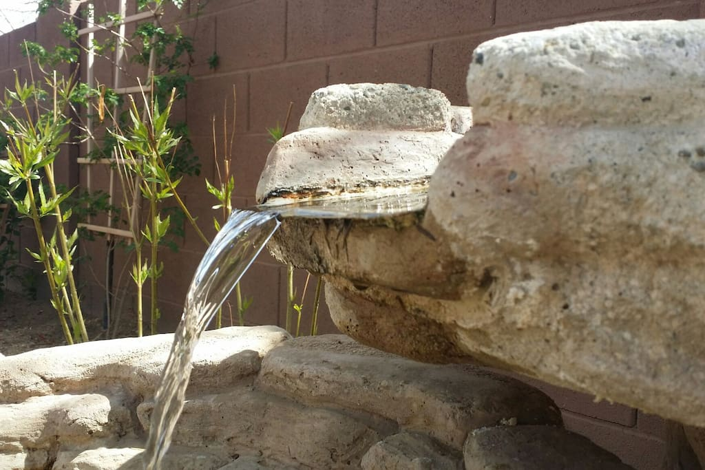 Fountain in the back garden brings a variety of birds and lizards to our little watering hole.