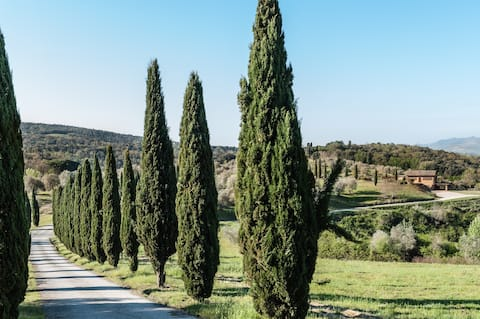 Cercis - La Palmierina