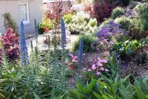 Charming cottage garden with year round interest