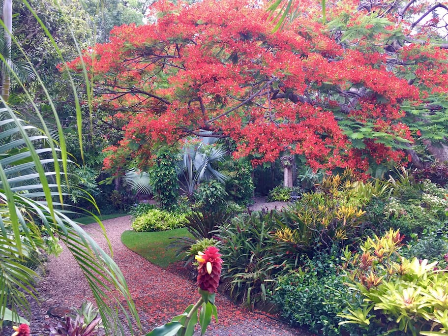 Lush tropical gardens with meandering gravel walks