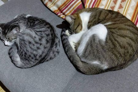 guesthouse_Yashima 2-3 (Cats in old Japan house)