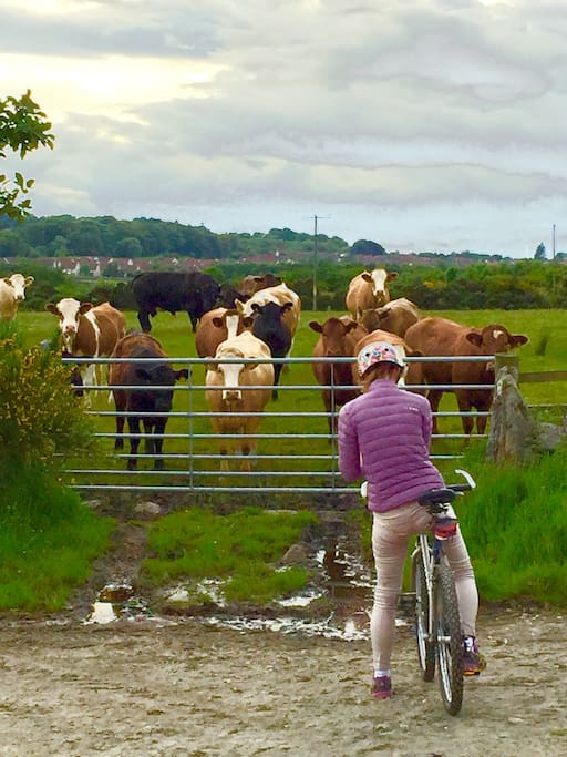 Plenty of cycling places around Kingswells