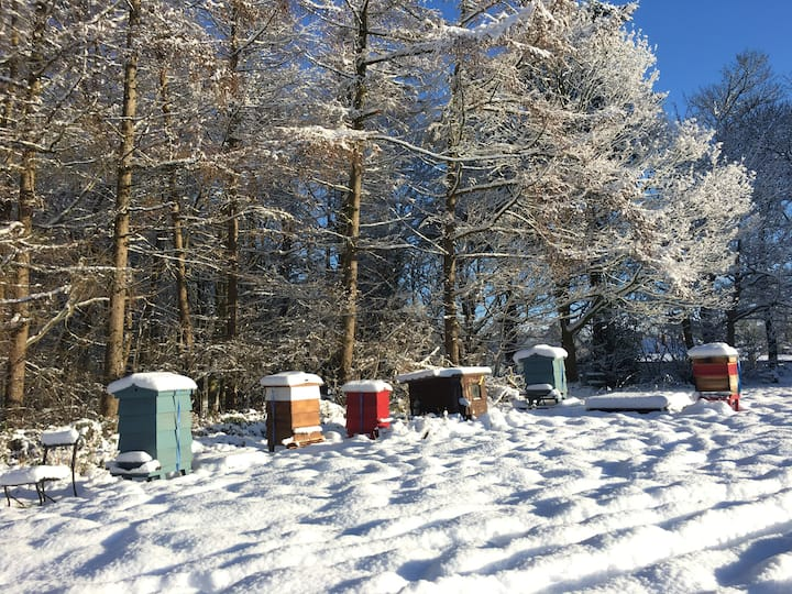 The Apiary in winter