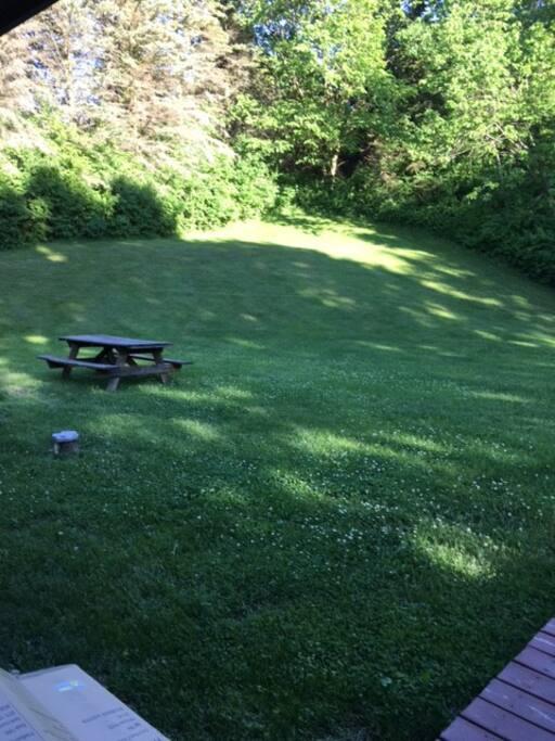 Backyard - 1 acre