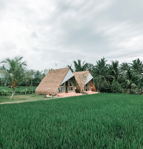 Beautiful Panoramic Rice Field - Segitiga Haus