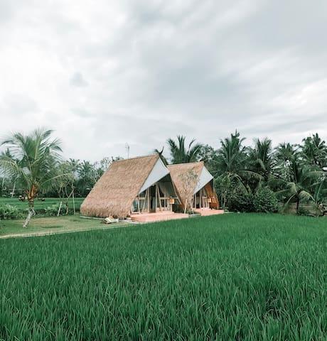Beautiful Panoramic Rice Field - Segitiga Haus