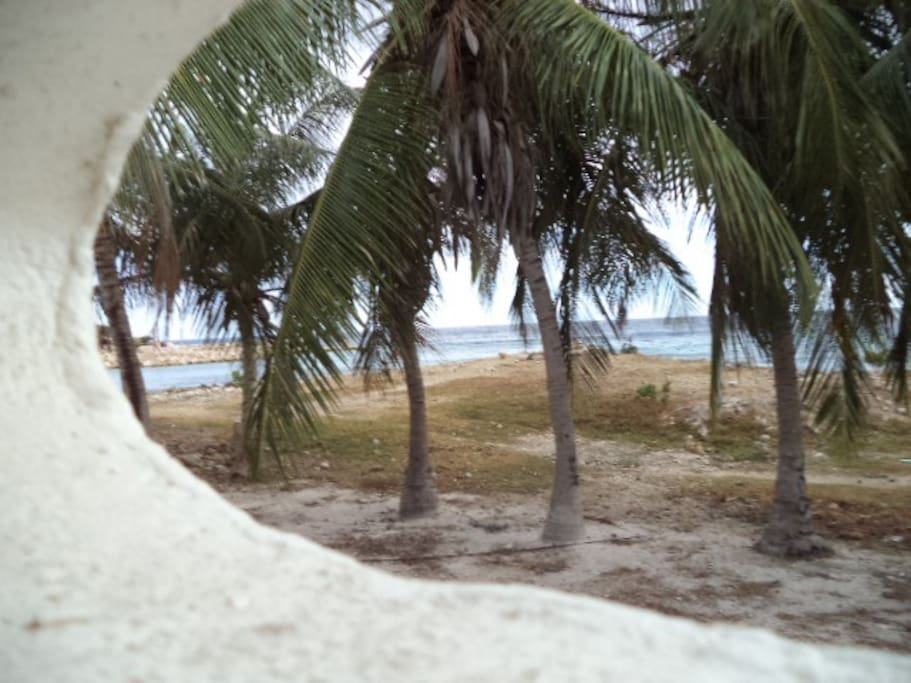 Een paar heerlijke palmbomen om in de schaduw te zitten of om uw hangmatje op te hangen.