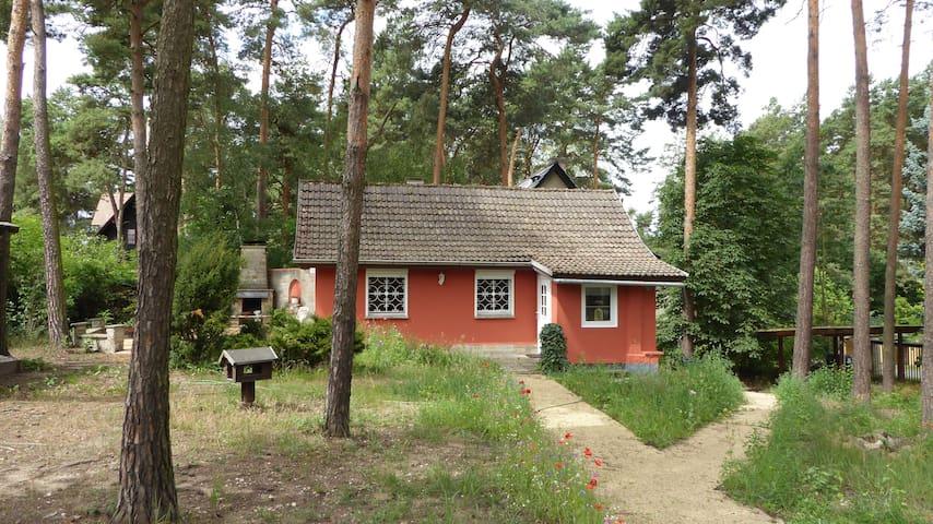 Ferienhaus in der Dübener Heide - Bad Düben - Dom