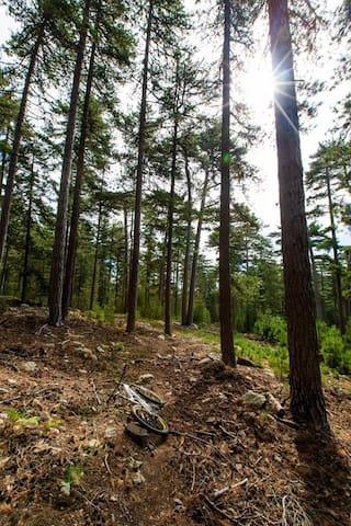 Forêt de Rospa Sorba