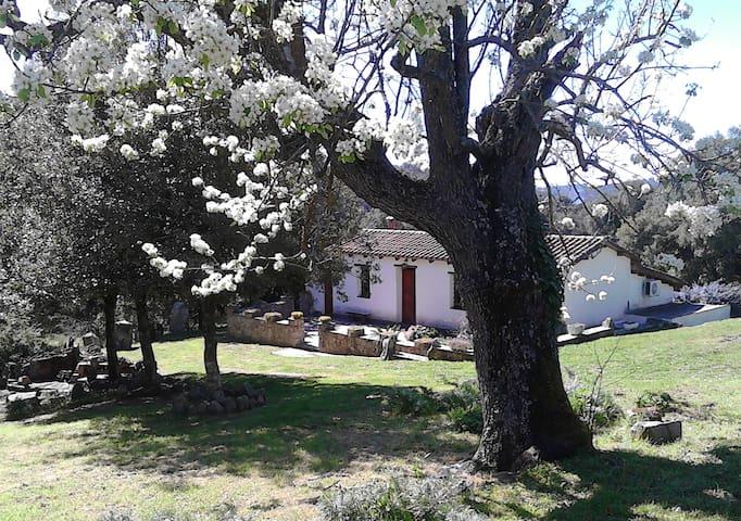 B&b I Menhir, casa rurale. Camera doppia