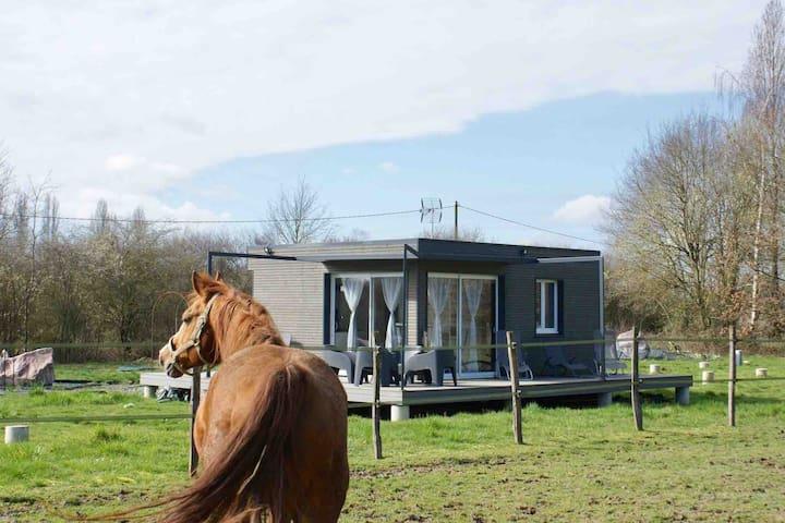 Cottage tout confort au milieu des chevaux