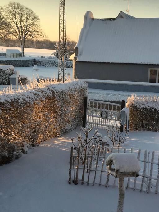Min forhave i sne.