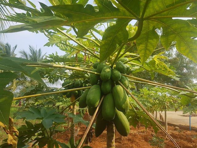 AsNewFarms - Experience Real Farm-Workfromfarm.