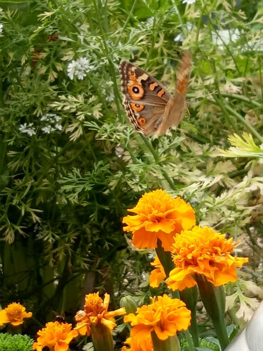 Marigolds are a natural bug repellent. Although I don't mind sharing the garden with the butterflies as long as they are not white!