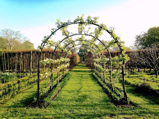 Pear tunnel in Spring
