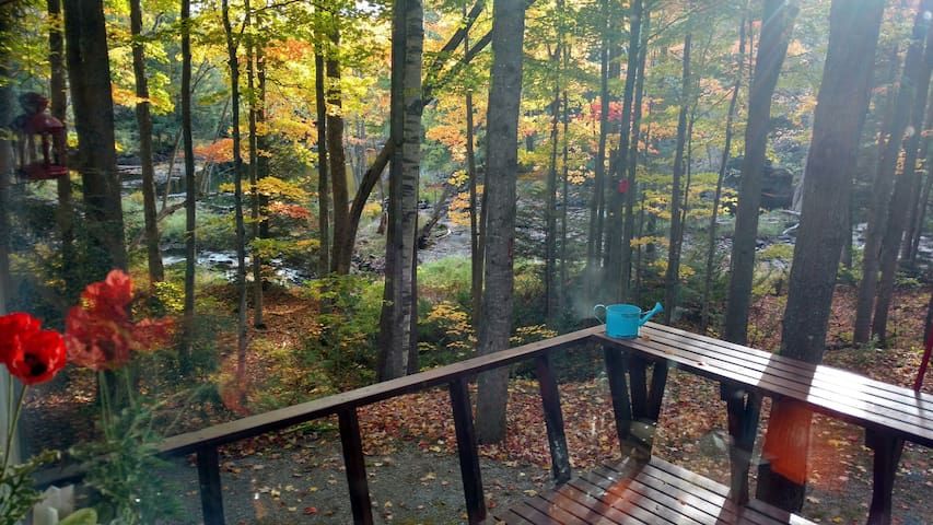 Bird House Cottage (3BR, riverfront, sleeps 8) - Bobcaygeon - Houten huisje