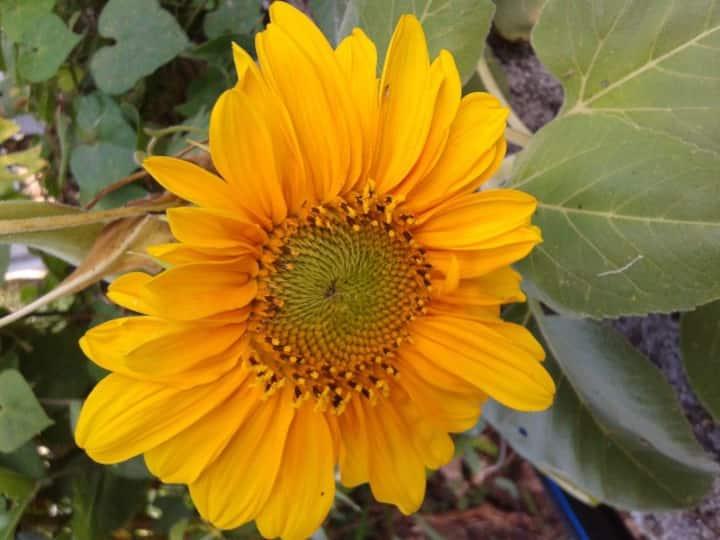 Oasis Nature Lodge - Fleur Soley