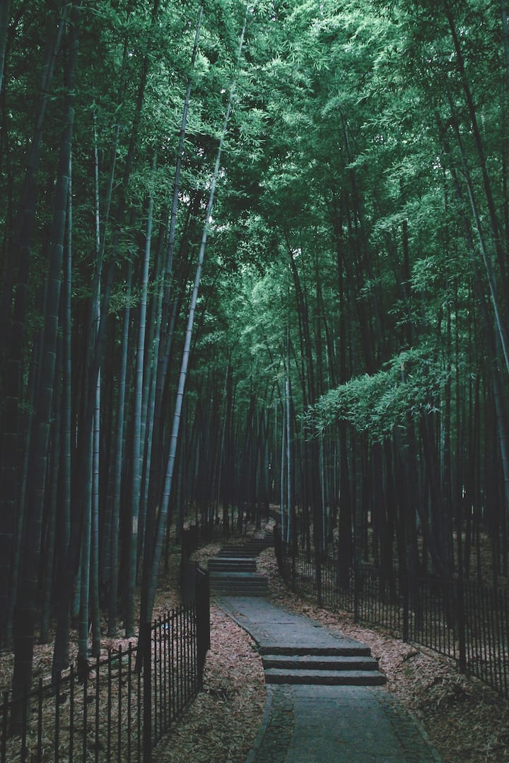 竹类植物园