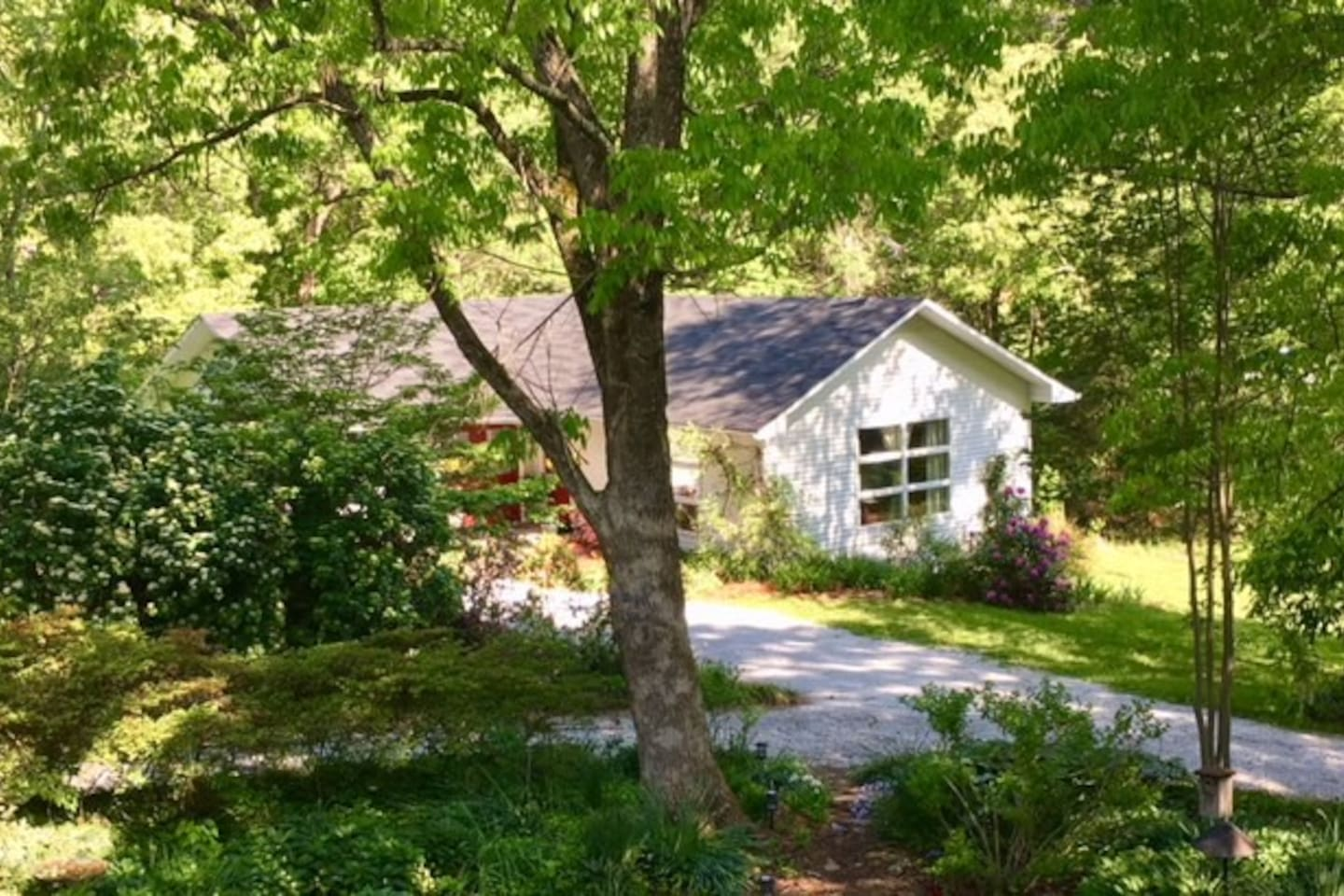 FOREST FOX COTTAGE/SHADOW OF PILOT MTN