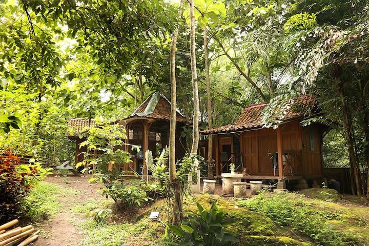 Omah Jegok 'Jungle' Camp Woody Hut