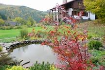 Back yard pond in October