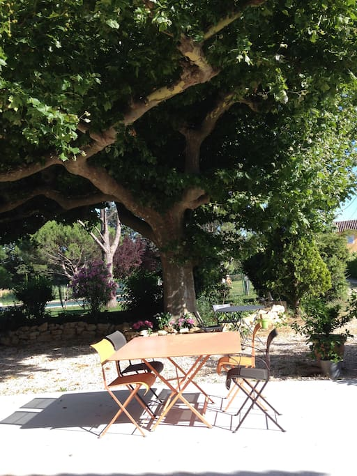terrassa a l'ombre du platane centenaire