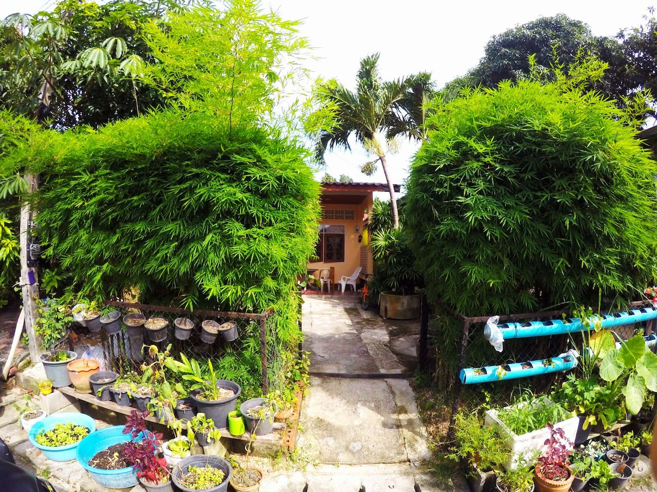 Bamboo lotus garden for quiet evenings on the terrace