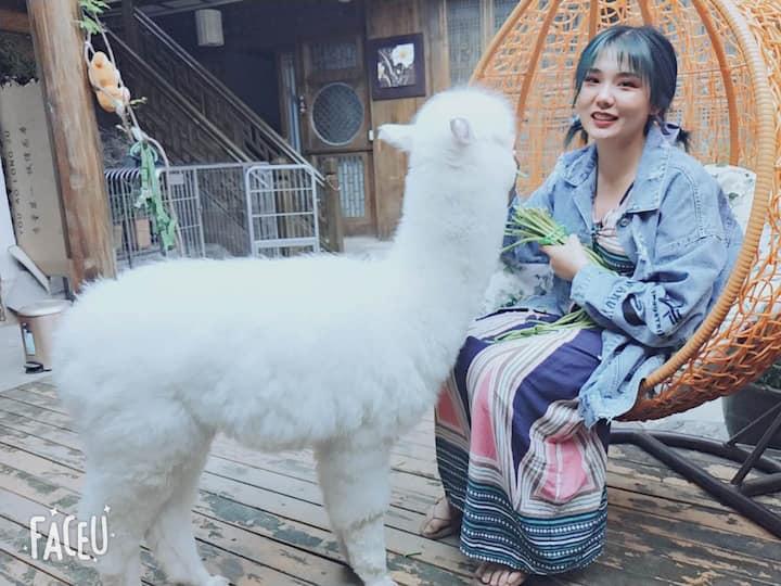 炒鸡萌宠羊驼苏西-免费定制旅行-有空调电热毯-可免费做饭洗衣-经济舒适大床房
