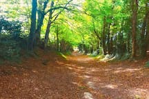 The beautiful woods leading to Halnaker Mill, just outside Chichester