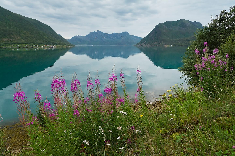Sifjord fjord