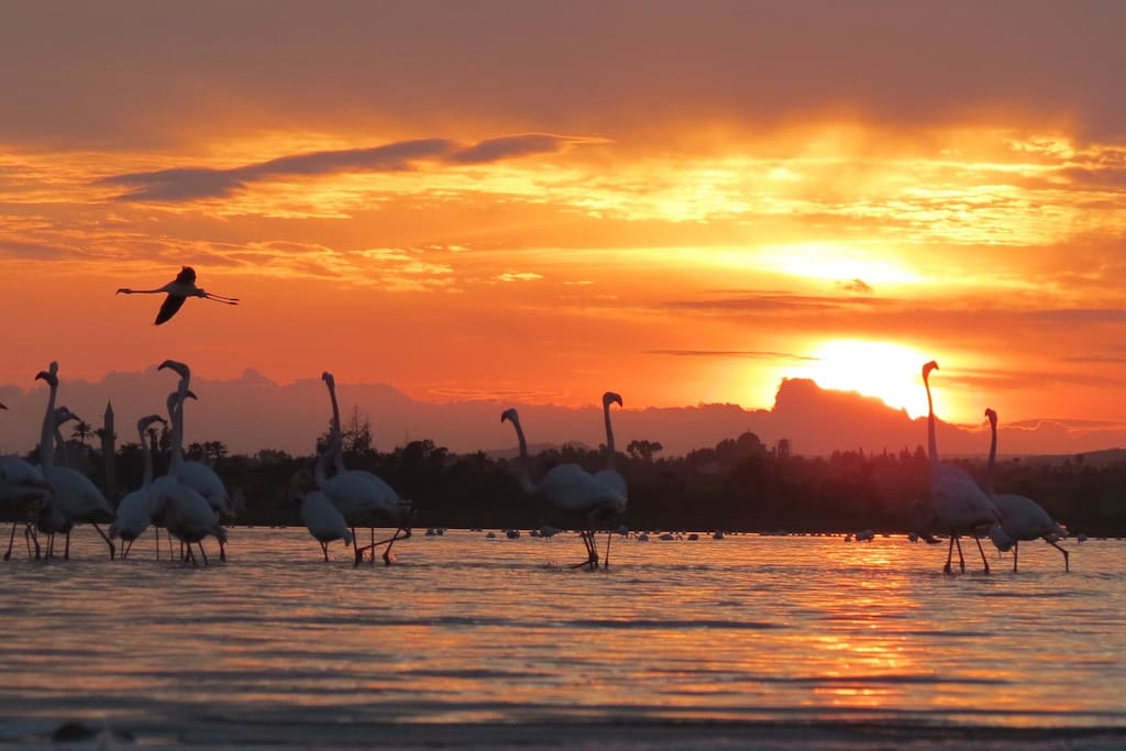 nearby Salt Lake with flamingoes in winter time