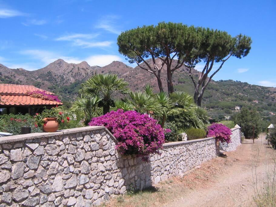 Gartenimpressionen mit Haus