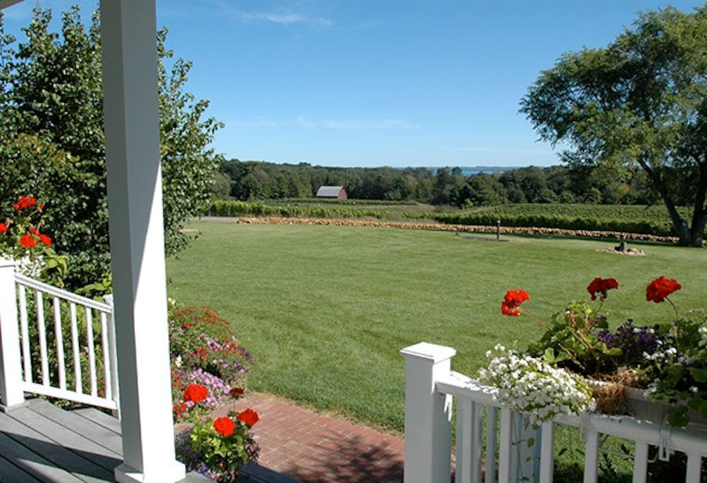 View of the vineyard from the Guesthouse porch