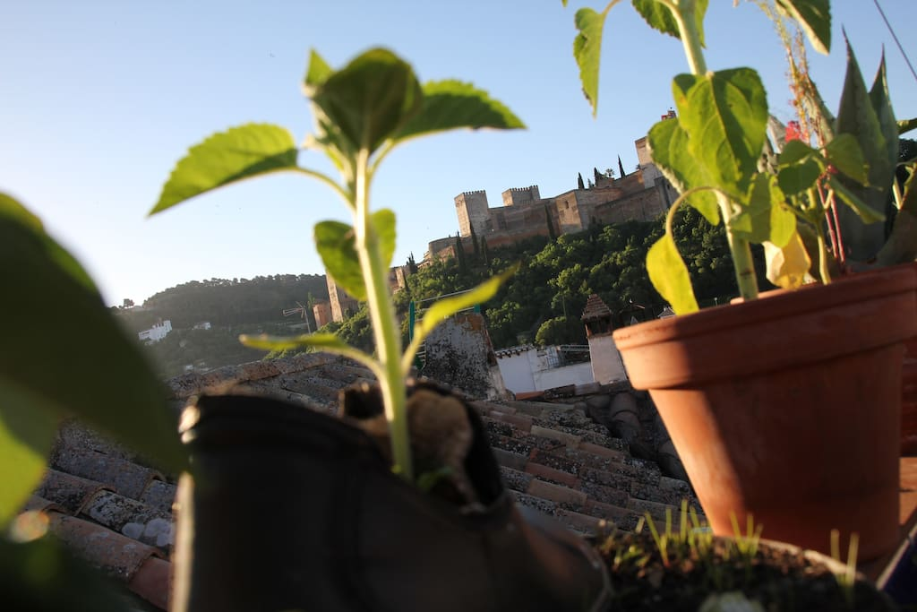 Un jardín secreto en nuestra terraza frente a la Alhambra. Secret garden in our terraze, just in front of Alhambra.