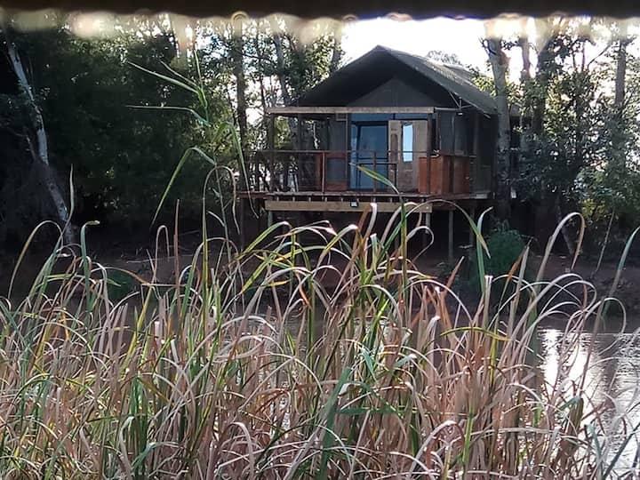 Waterlea-on-River Tented Cabins. Hadeda