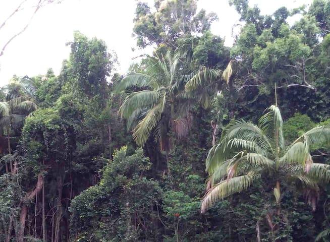 Noosa Rainforest Retreat - Noosa Heads - Bed & Breakfast