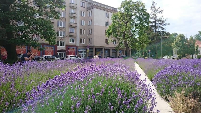 AWESOME 2BR  CITY CENTRE DREAM HOME !!! - Košice - Apartment