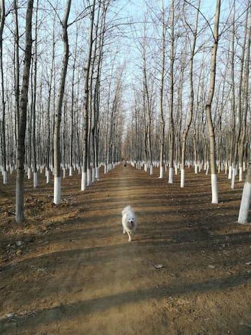 两个人一只狗,欢迎与我们作邻居 - 北京