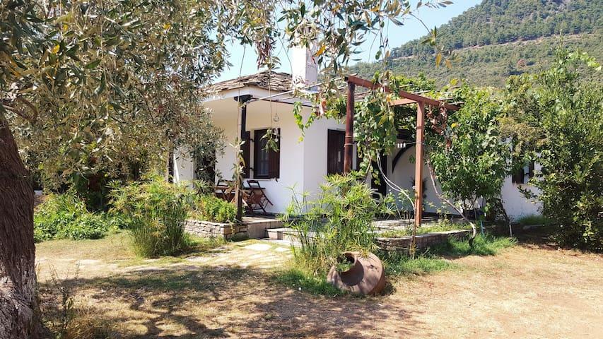 Golden Beach Villa 1 - Thassos - Thasos - Villa