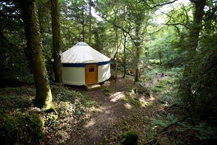 Large Yurt in a Quaint Woodland Setting