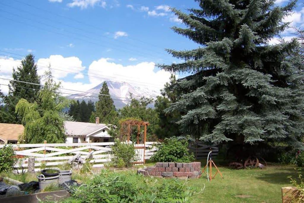 Mt Shasta from our garden