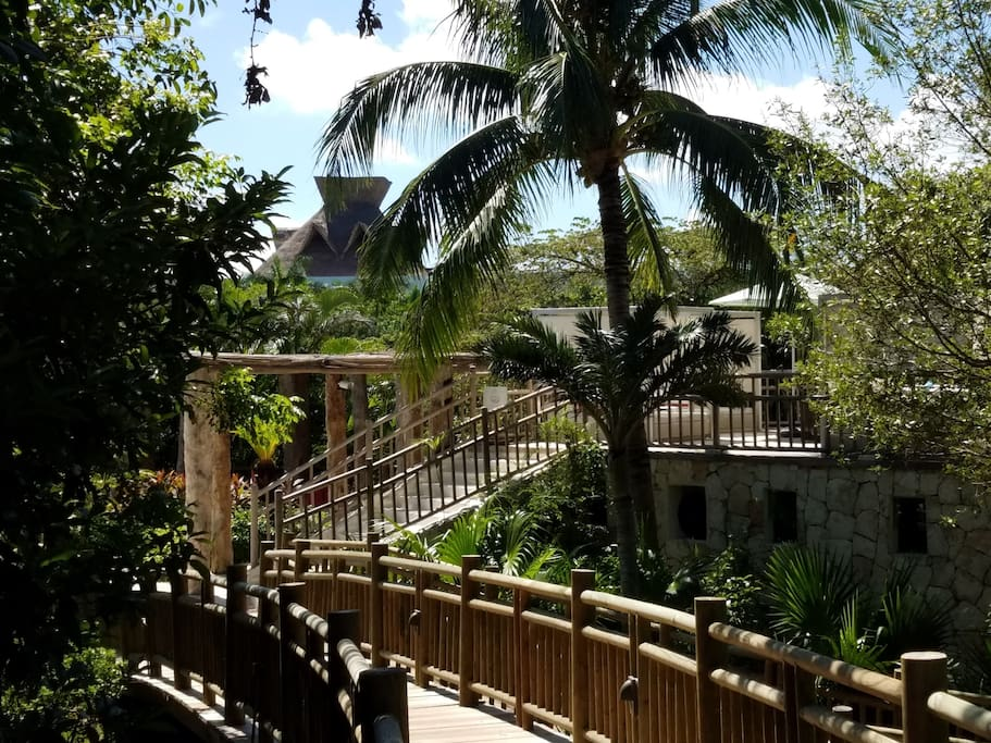 resort located in the jungle, with wooden walkways throughout
