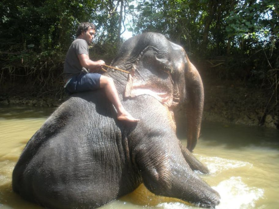 special education programs about asian elephants(savingganesh.org)