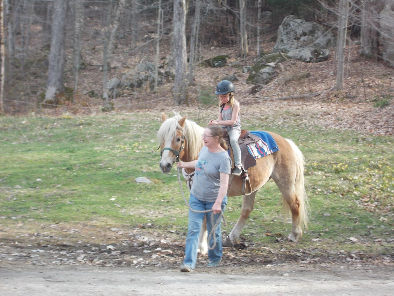 Experience the friendly horses!