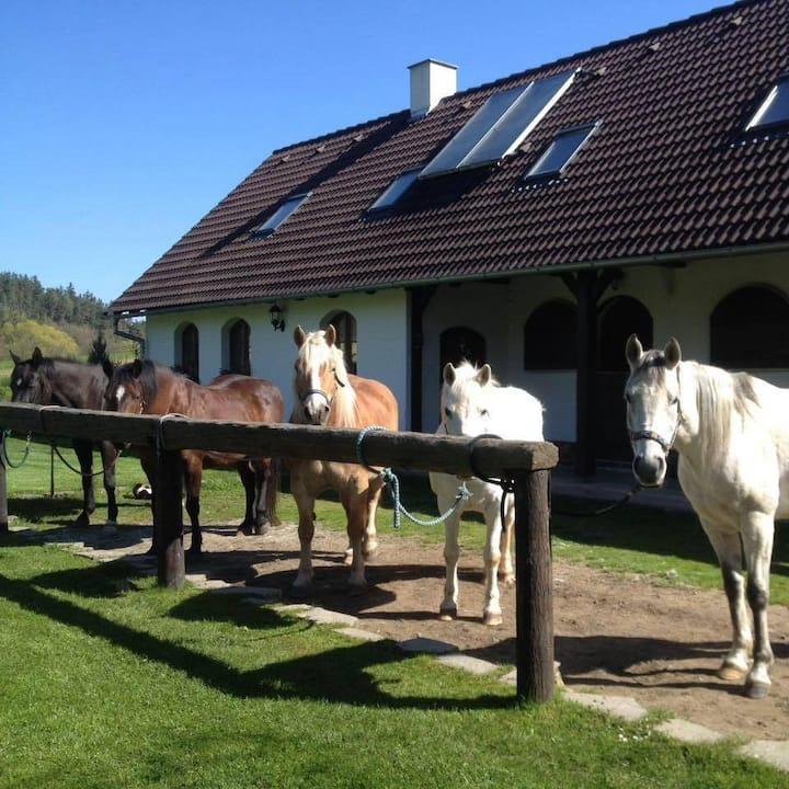 Farma Malenice - dovolená u koní