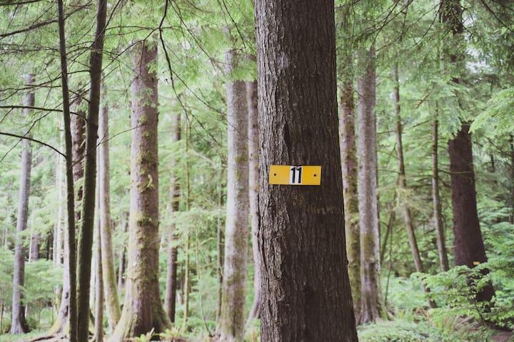 Campsite #11 · Forest RV Campsite