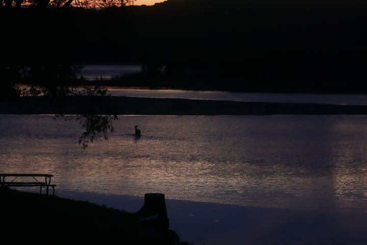 It is very common to see deer out in the water, especially at dusk and dawn