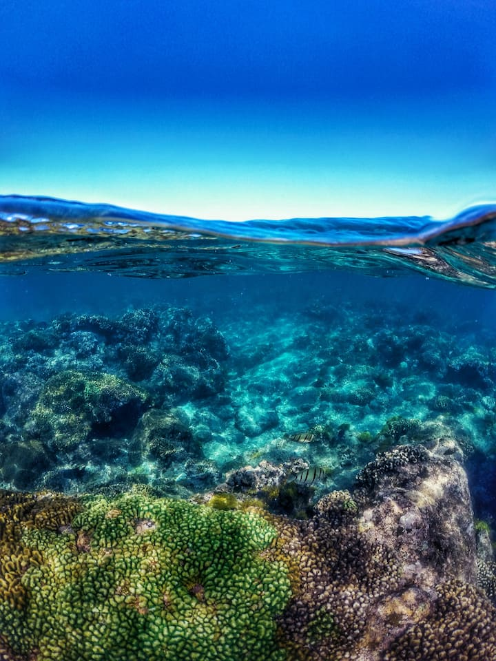 Nice coral reef
