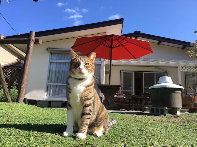宿の看板猫【吾朗】さん。人が大好きな甘えん坊です。